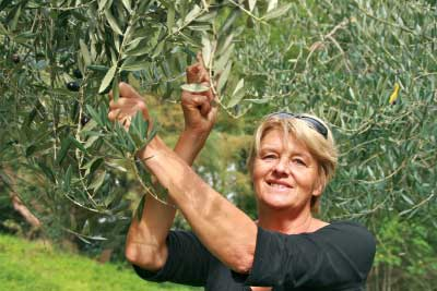 Kristin-olijven