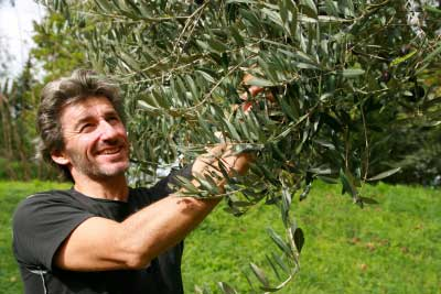 Wim-olijven